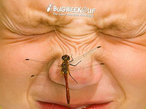 Bug Week